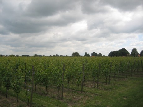 Op de Horst wijngaard